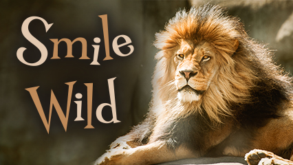 Wildlife World Zoo (Print, Digital, Outdoor)