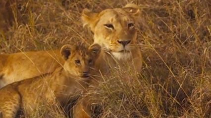 Heart of Africa (TV, Digital)